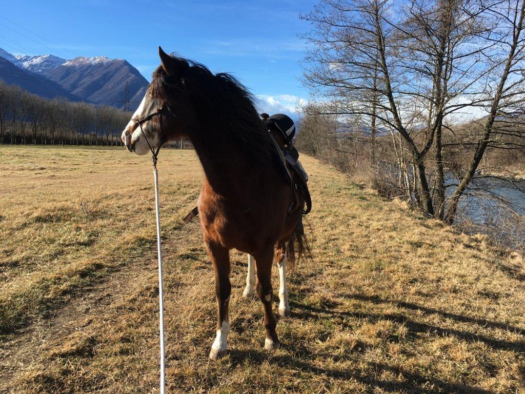 Equitazione Terapeutica e Pedagogica, Rieducazione Equestre