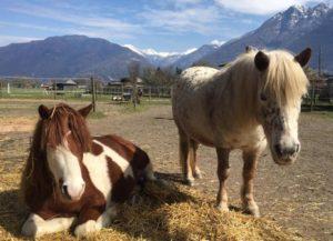 equitazione terapeutica e pedagogica