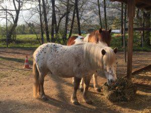 Sputnik e Elisir - equitazione terapeutica e pedagogica