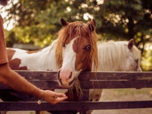 Elisir de Miery, equitazione terapeutica, rieducazione equestre, equitazione-terapeutica.ch